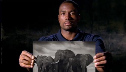 NBA球星:NoHype大象犀牛