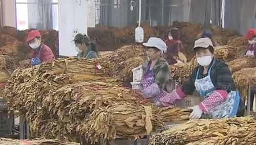 浏阳:烟田种出的大米可以放心吃
