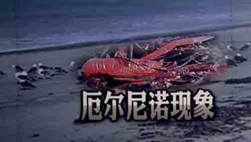 大量红蟹冲上加州海滩 疑是全球变暖所致