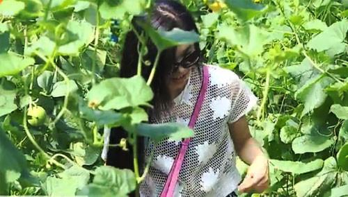 衡阳县:采摘西甜瓜 体验农家乐