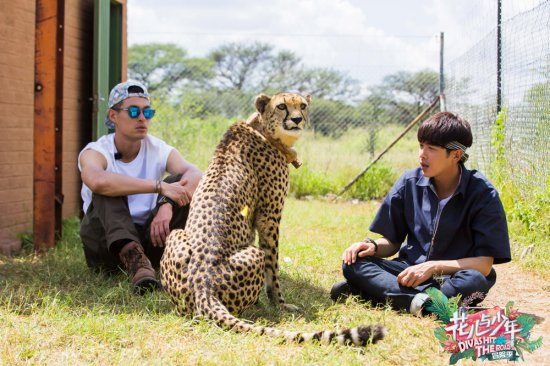"""张若昀与豹亲密接触""""花少团""""开启关爱野生动物之旅"""